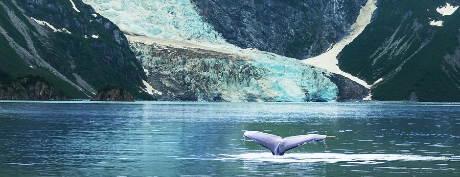 Alaska Whale